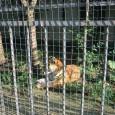 Близо 8000 посетили зоопарка през почивните дни